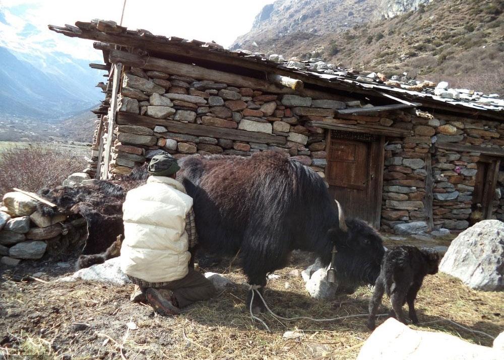 डलर तान्दै नेपाली छुर्पी